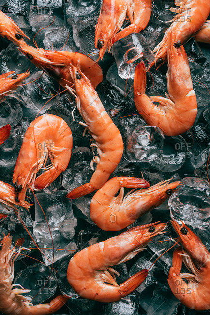 View from above of pile of shrimps on ice cubes