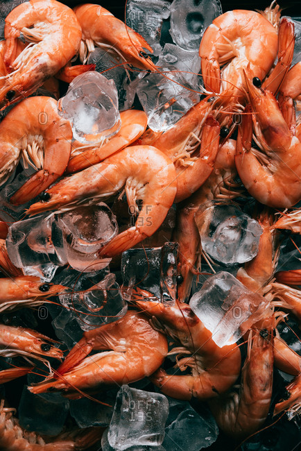 Elevated view of pile of shrimps on ice cubes