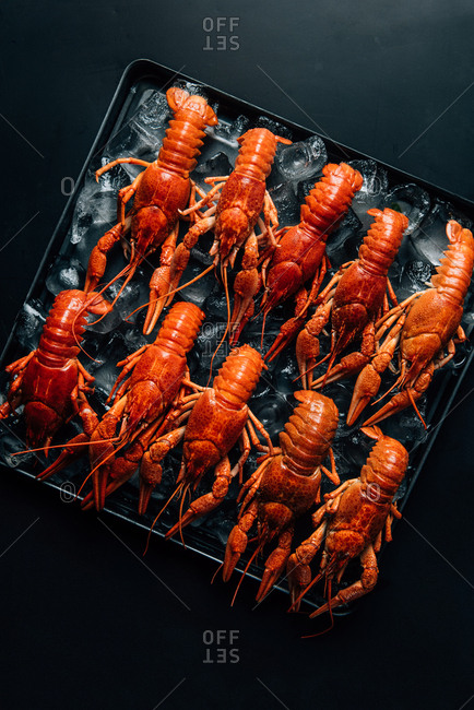 Top view of pile of crayfishes placed in row with ice cubes on baking tray