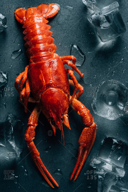 Closeup view of crayfish on tabletop with melting ice cubes