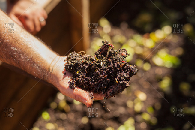 Man holding hand full of soil from a garden