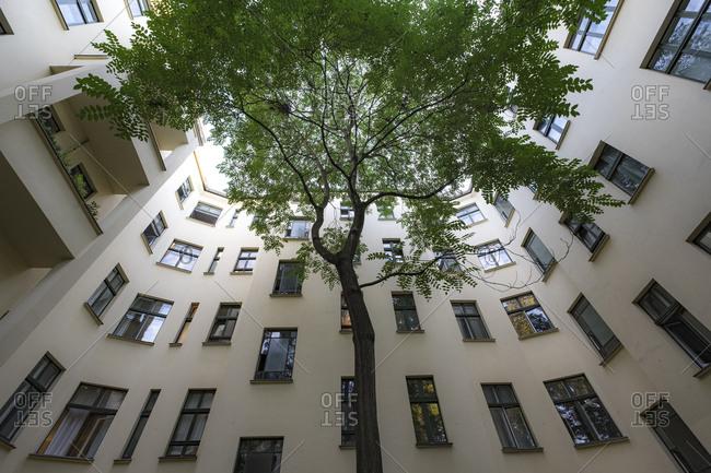 A tree grows in a courtyard, Berlin, Germany