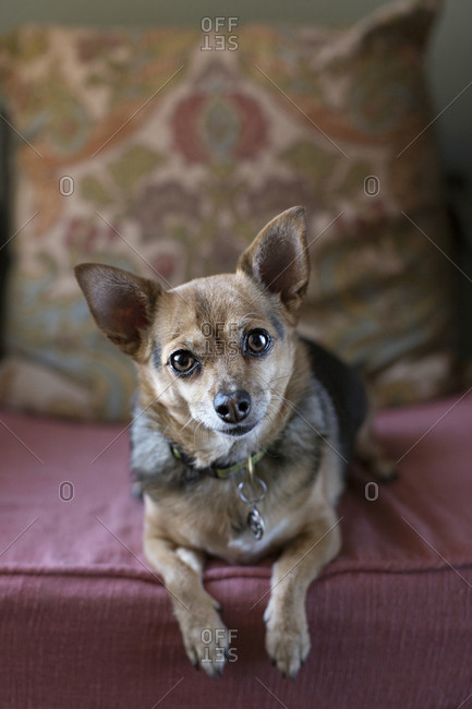 Cute dog sitting on furniture cushion