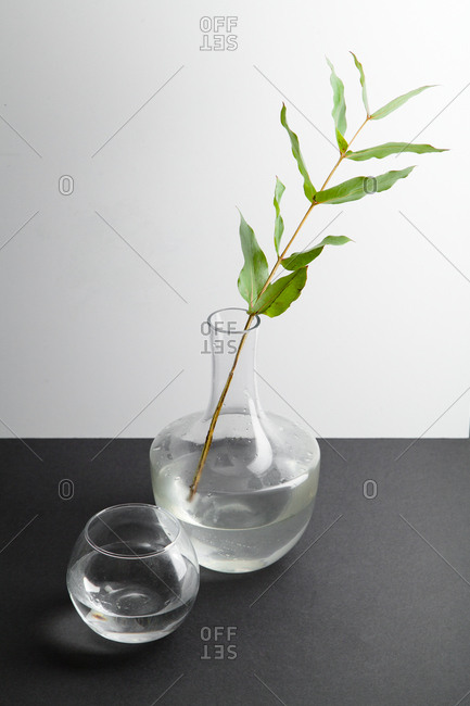 Composition with eucalyptus branch, seashell, and water in glass sphere