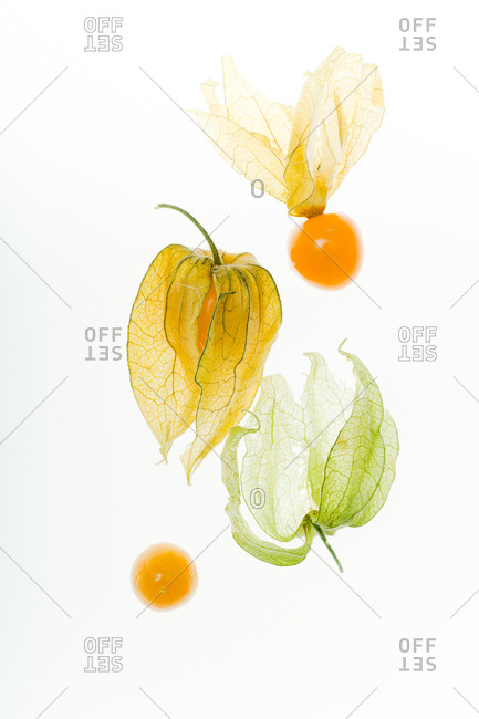 Physalis flower and physalis berries smashed on white background