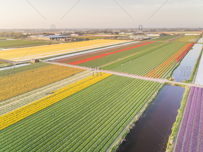 Aerial view of beautiful tulip fields in Lisse, Netherlands