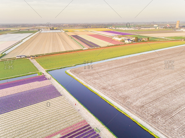 Amazing aerial view of beautiful colorful tulip fields in Lisse, Netherlands