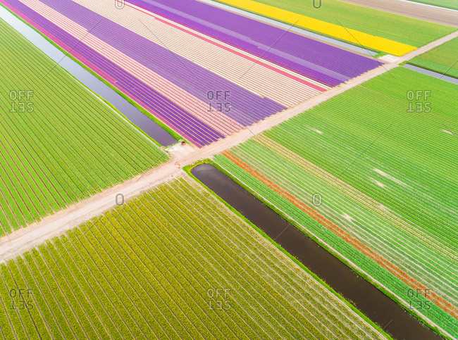 Amazing aerial view of colorful blossoming fields of tulips in Lisse, Netherlands