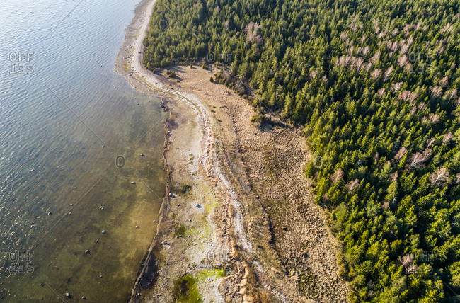Aerial scenic view of algae beach surrounded by forest on the island of Vormsi, Estonia