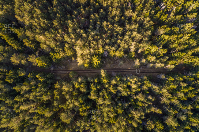 Aerial view of dirt road going through the forest in Forby on Vormsi island, Estonia