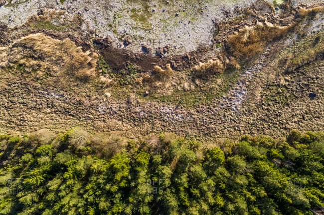 Aerial abstract view of algae beach by the forest in Forby on the island of Vormsi, Estonia