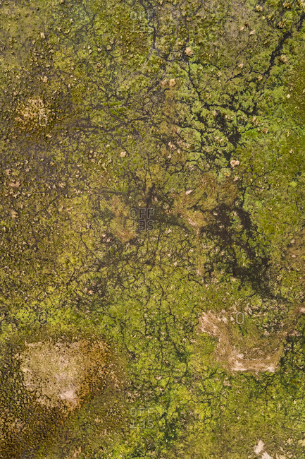 Abstract aerial view of swamp area in Estonia