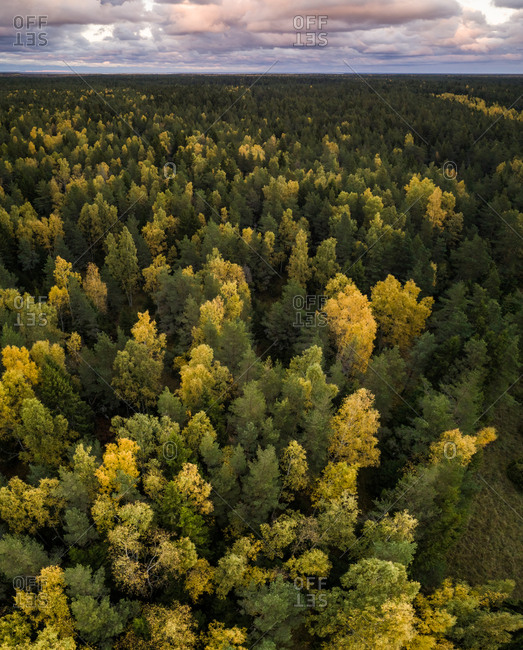 Aerial view of colorful forest in Estonia.