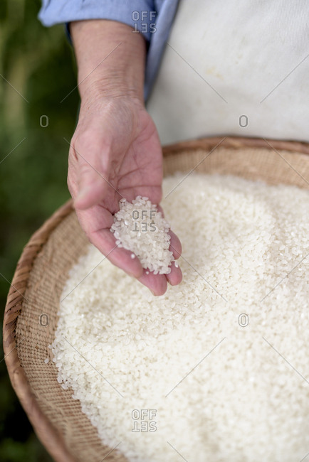 High angle close up of human hand holding bowl with freshly harvested rice grains