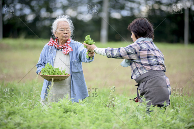 Elderly woman with grey hair and woman wearing checkered shirt standing in a garden, picking fresh vegetables