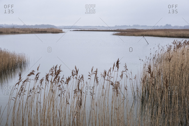 Landscape view across a river with golden reeds growing alongside the riverbank