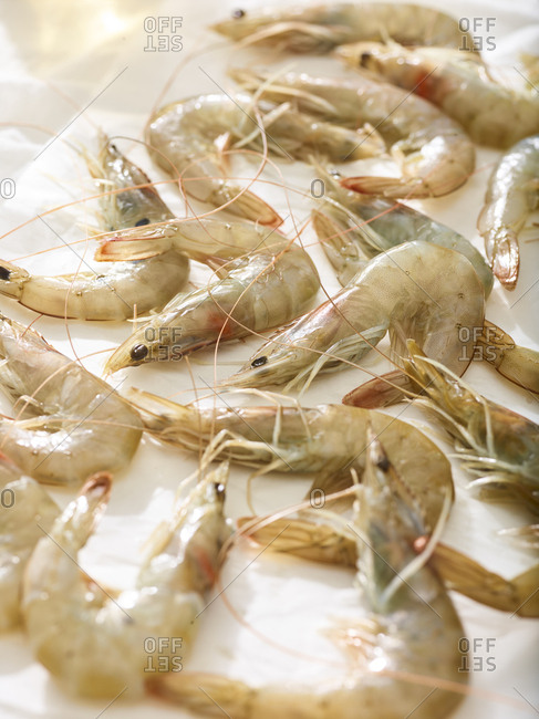 Close-up of fresh shrimp on a white background