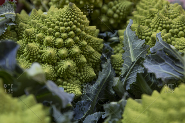 Fresh romanesco for sale at a market stall in Bologna, Italy.