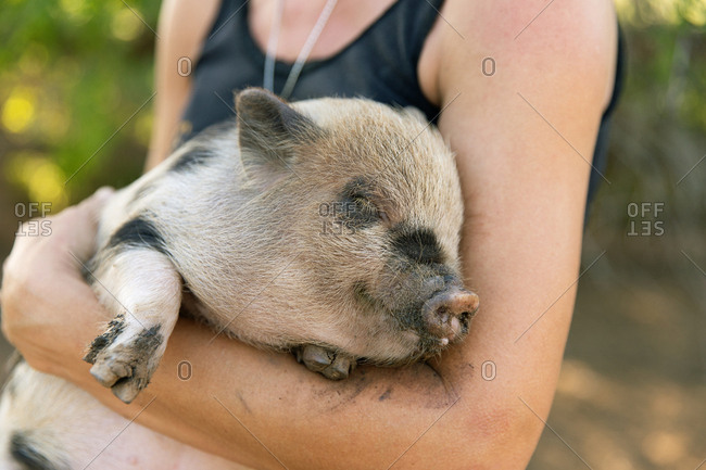 Close up of little piglet in arms of woman on ranch in Austin, Texas
