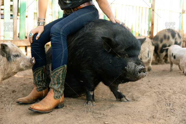 Woman dressed in western style sitting on back of large domestic pig on ranch in Austin, Texas