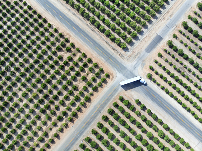 Bird's eye view of tractor trailer making right angle turn among orange tree plantations in Visalia, California
