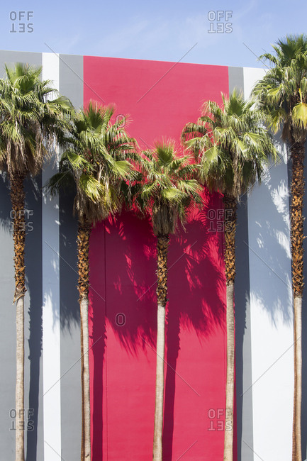 Colorful striped wall partially hidden by groomed palm trees in Nevada