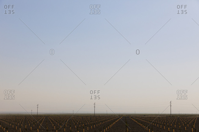 Countless stakes create geometric patterns in farmland in California