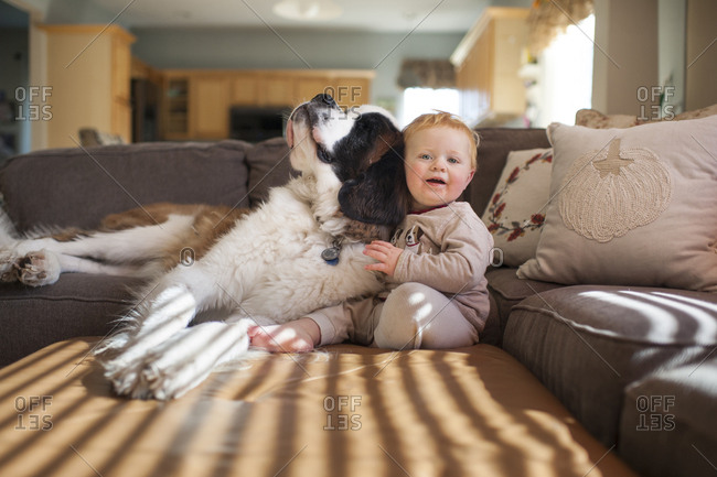 Portrait of cute baby boy playing with dog on couch in living room at home