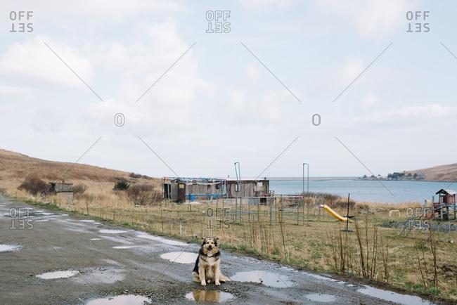Dog sitting on muddy dirt road in rural Alaska