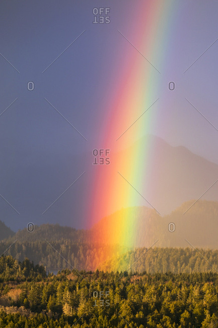 Close up of rainbow plunging into forest as setting sun illuminates trees