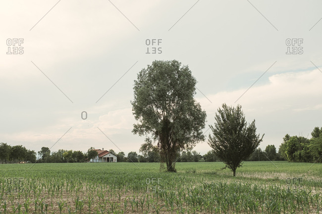 Farmland in Portogruaro, Italy