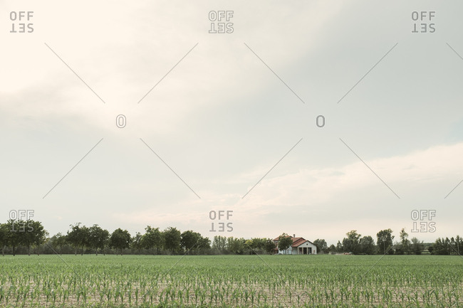 Farmhouse and rural field in Portogruaro, Italy