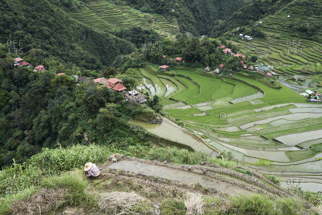 Views of rice terraces village with unrecognizable local filipino farmer working on rice fields wearing hat. Batad, Philippines.
