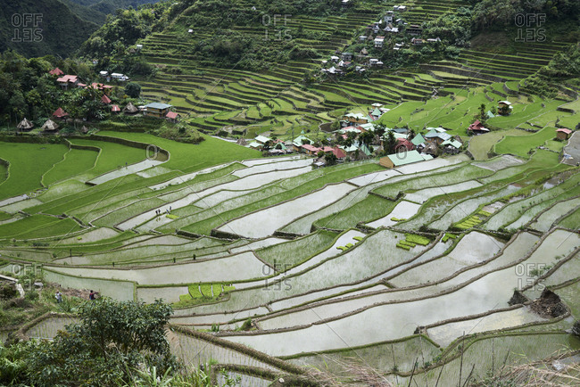 Crop valley of Batad surrounded by rice terraces and houses. Batad, Philippines.