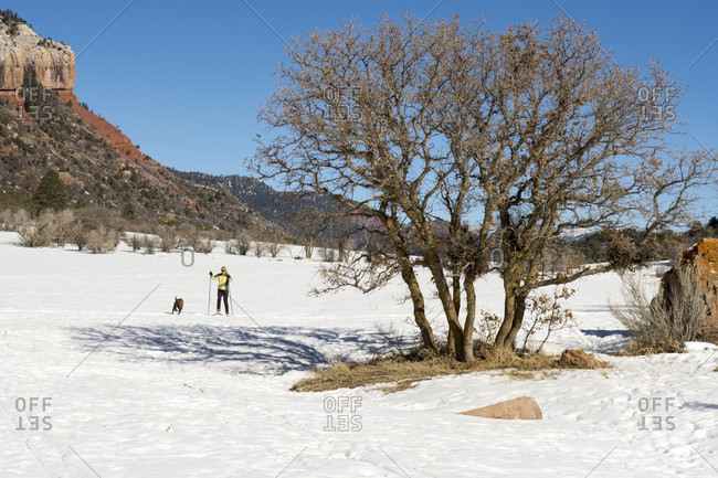 Adult woman skiing with dog in Falls Creek Valley on sunny day, Durango, Colorado, USA