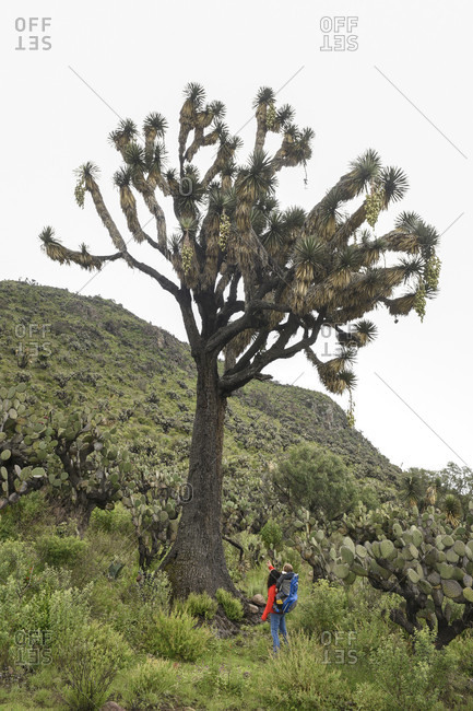 Mother with son looking at large ancient tree while hiking at archeological area of Xihuingo, Tepeapulco, Hidalgo, Mexico