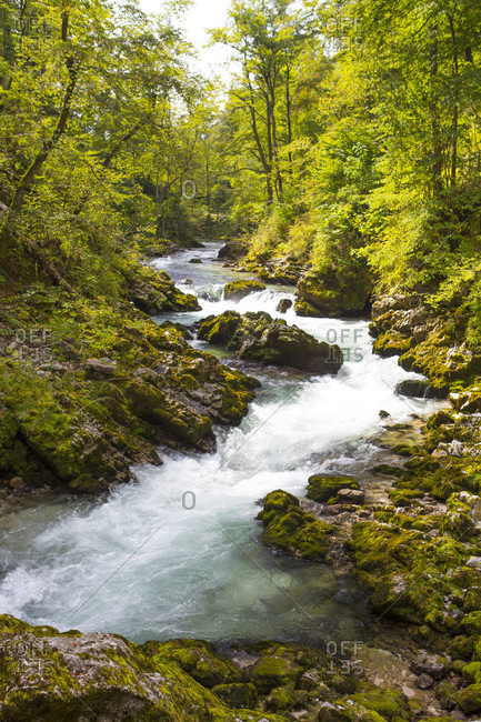 A mountain stream flowing through a forest in Vintgar gorge, Gorje, Bled, Upper Carniola, Slovenia