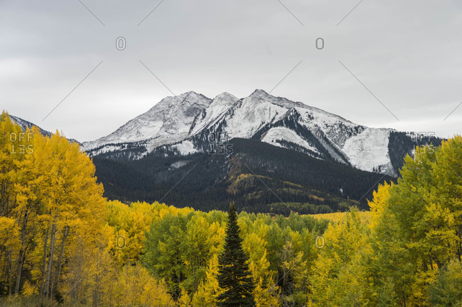Scenery of snowcapped mountain and forest with autumn colors in foreground, Crested Butte, Colorado, USA