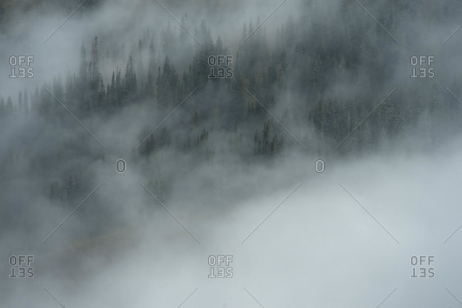 Low clouds loom around pine trees, Crested Butte, Colorado, USA