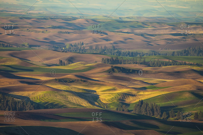 Scenery with rolling hills, Steptoe Butte State Park, Palouse, Washington State, USA