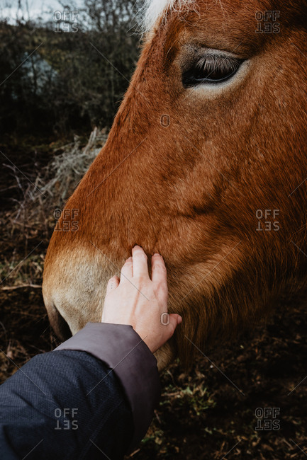 Hand of unrecognizable person touching and stroking brown horse in nature