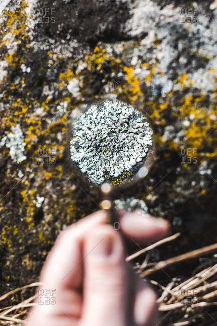 Hand with magnifying glass in nature