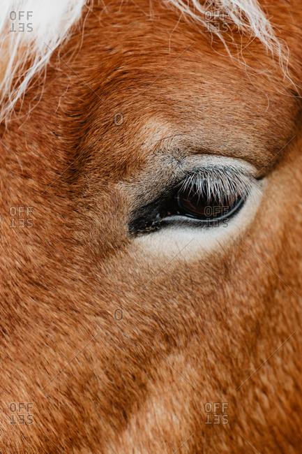 Close-up sad expressive eye of chestnut horse