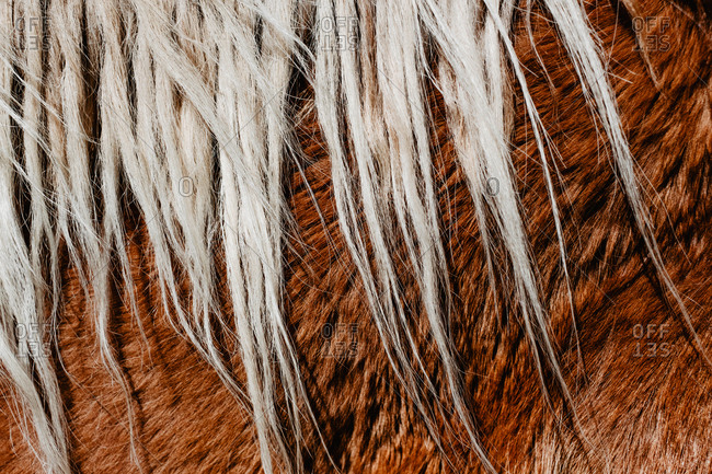 Close-up back of chestnut horse with blonde mare