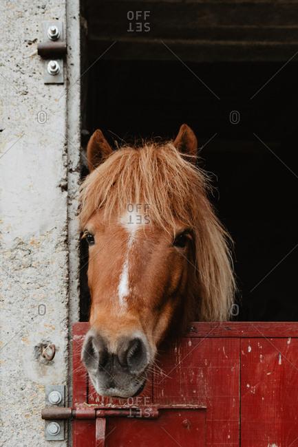 Brown horse standing in yard