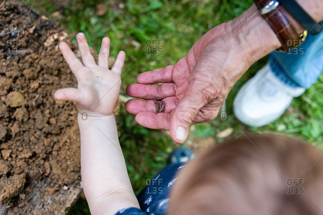 Toddler and grandfather looking at worms