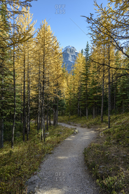 Canada, Alberta, Banff, Footpath leading through forest in Banff National Park