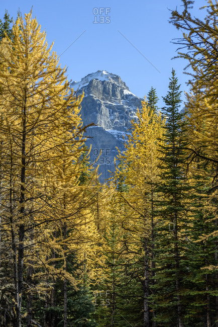 Canada, Alberta, Banff, Trees and mountain peak in Banff National Park