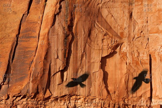 Shadows of flying crows on red rock in Monument Valley