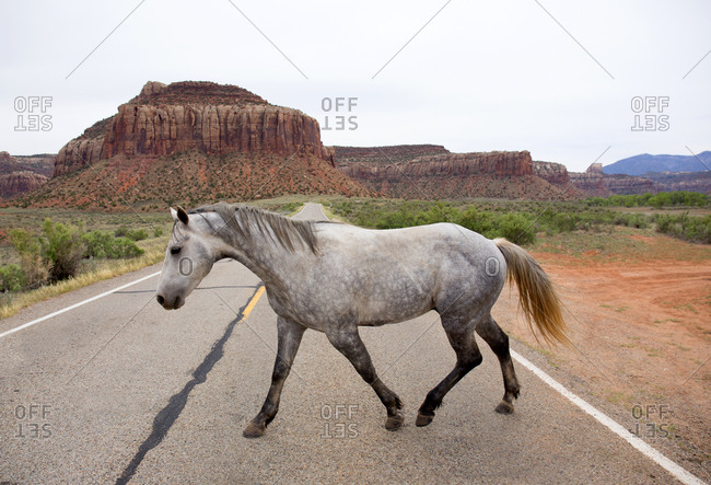 Wild horse crossing two lane highway
